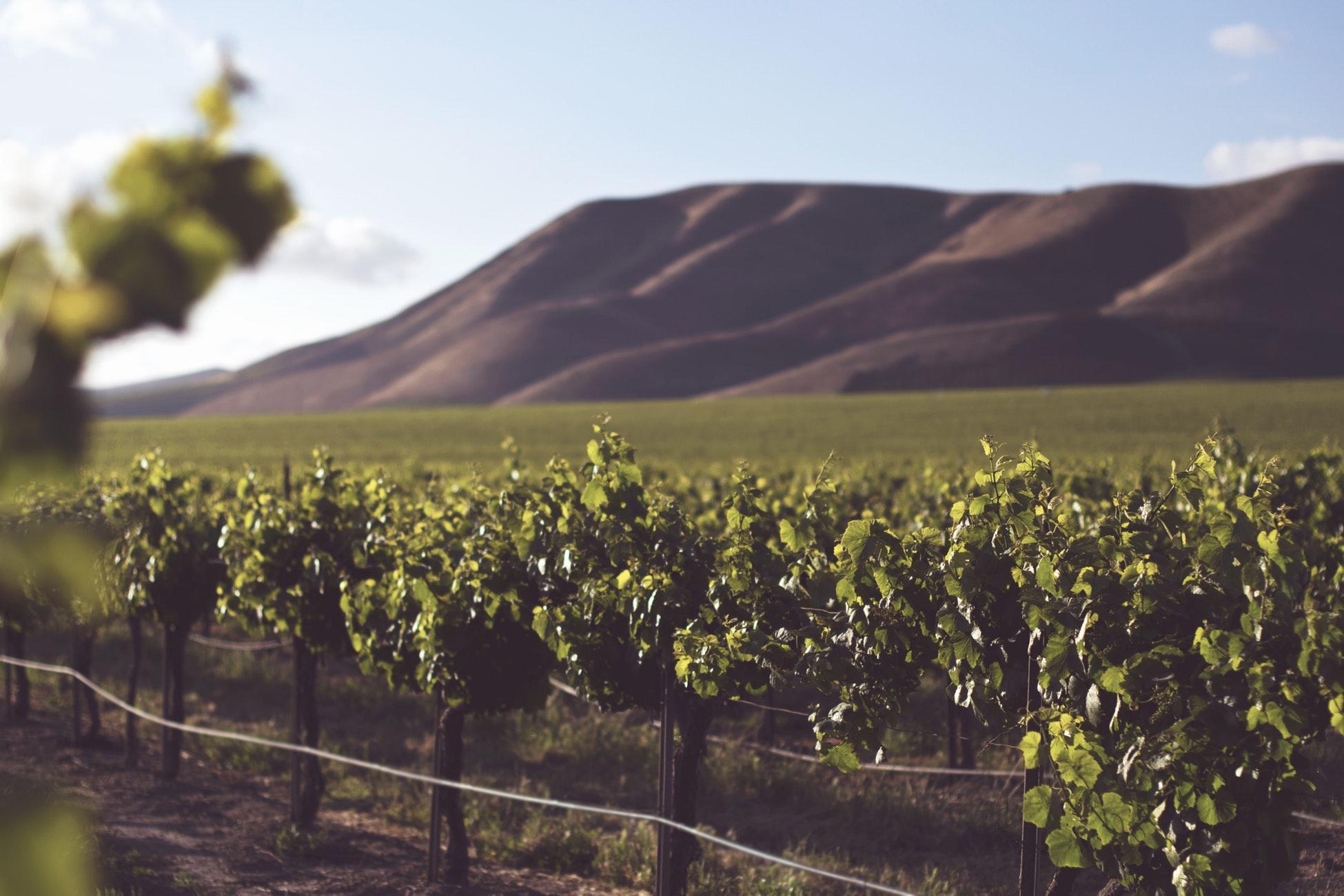 Beautiful Vineyard Venues at Vegas to Vines